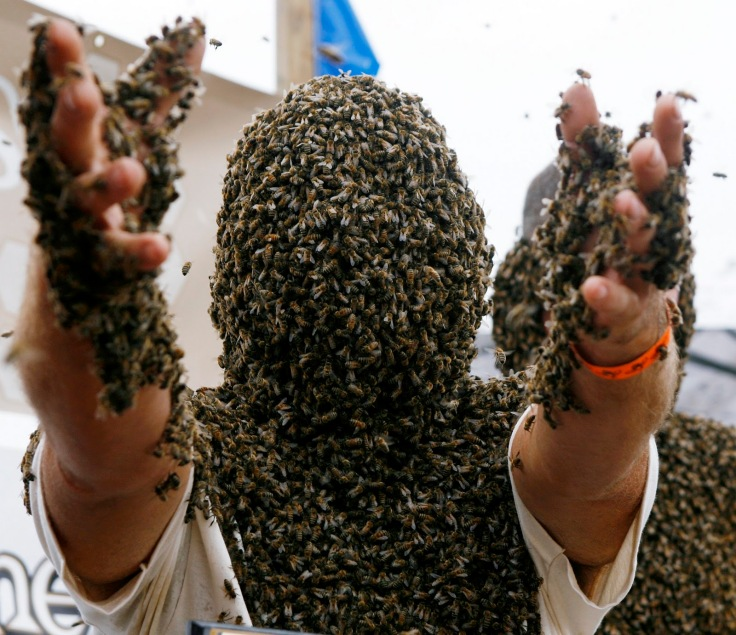 bee-beard-man-covered-in-bees